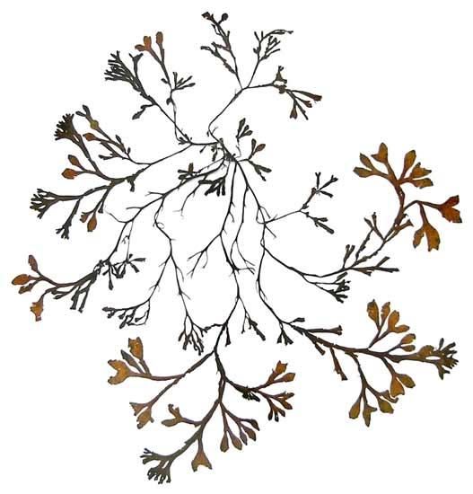 ... Botany Comp... Framed Art